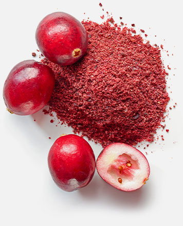 pdp 02 Freezedried Fruchtpulver